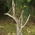 Garden sculpture - driftwood, harakeke